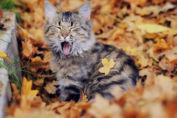 Kot jesień