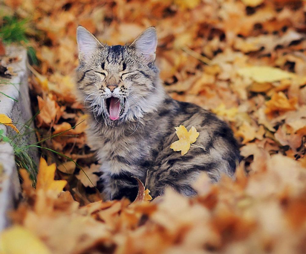 Kotek Blutek Czyli Pozytywny Wierszyk Na Jesienne Wieczory